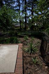 IMG_8633.CR2 (jalexartis) Tags: yard landscape backyard landscaping shrub yucca shrubbery yuccaplant