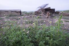 Flowers (laporpo alkapunzi) Tags: beach fujifilm 1855mm f28 pantai terengganu xt10 pantaikelulut