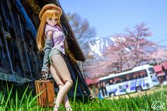 (cnvl) Tags: spring doll sony sigma yuki iwate  cherryblossom dd dollfie volks  105mm  morikawa  24105mm cnvl a99 koiwaifarm