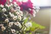 IMG_4149 (Josy'ta) Tags: rose rosas rosascolombianas flowers flores flor diadosnamorados love