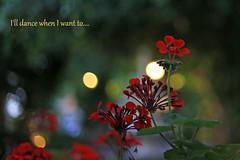 Dance (eleni m) Tags: pelargonium flower plant outdoor bokeh tree garden lights evening dof dance