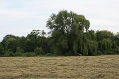 22-IMG_2524 (hemingwayfoto) Tags: baum ernte gras heu heuernte landwirtschaft natur scheune wiese
