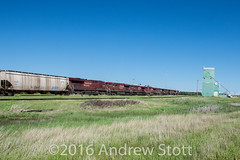 Lots of Power (awstott) Tags: train locomotive cp ge cpr generalelectric 8790 canadianpacificrailway ac44cw 8649 8759 8845 8916 9368 9739 9763 es44ac bawlf