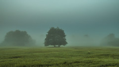 foggy fields (bocero1977) Tags: morning trees light sky mist green nature colors field grass fog clouds germany landscape nikon outdoor foggy dust rosslau