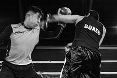 _DSC0433 (Fotografa Valparaso) Tags: boxing boxeo ring cuadriltero pelea lucha fight deporte combate valparaiso valparaso interior gimnasio