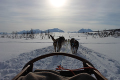Chase the sun (e_m_b_r_y) Tags: travel trees winter sun mountain snow cold dogs norway north sparkle adventure sled artic troms