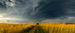 Alone in the field (Milen Mladenov) Tags: road blue summer sun storm tree green field yellow clouds landscape golden bush nikon alone hour sunflare 2016 d3200