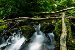 La Monne [Explore] (gael63) Tags: rivire france lamonne auvergne sauvage massifcentral eau river ruisseau gorges rochers calme puydedome t fraicheur nature poselongue summer