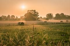 Grne Flammen (joschua777) Tags: sonnenaufgang sonnenuntergang korn feld heu natur landwirtschaft landschaft nikon d5500