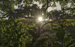 Summer sunset.. (ParadoX_Design) Tags: sun sunset light summer trees shade shadow sunflare flare lens leaves rays