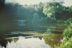 Ducks in Lake Salamandra (Moesko Photography) Tags: analogue smena8m lake water animal duck trees clouds reflection bush nature outdoor summer afternoon sunshine landscape hungary sopron