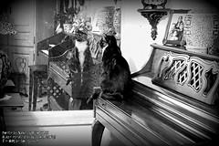 Happy Window Wednesday (NancySmith133) Tags: happywindowwednesday cats catportraits petportraits pets belovedpets