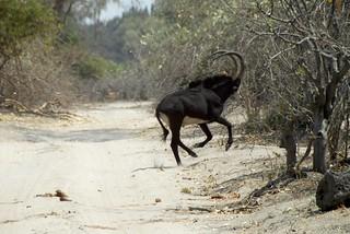 Namibia Hunting Safari - Caprivi Strip 4
