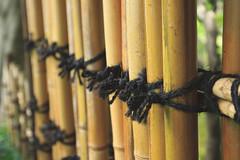 Fermement noue (StephanExposE) Tags: japon japan tokyo rikugien parc jardin garden park eau water canon 600d 1635mm 1635mmf28liiusm arbre tree nature stephanexpose