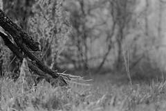 untitled (Anton Zabermach) Tags: nikonfe2 nikkor 50mmf18ai film analog 35mm bw blackandwhite rolleirpx dof bokeh nature selfdeveloped microphen