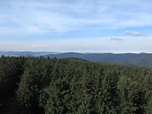Borówkowa / Borůvková (900 m)