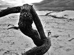Place. - Lugar. (EXPLORE) (Poldarkk) Tags: desert place sand tarnos poldarkk arte art aquitaine irun france wood sky