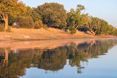 South Africa 2016 (mcmessner) Tags: adventure africa bj boat reflection river sunrise sunriseboatride suspended tongabezi tongabezilodge tree water zambeziriver zambia livingstone