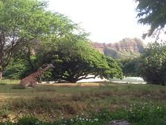 Honolulu Zoo (alist) Tags: