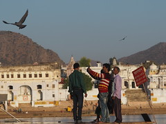 Pushkar Holy Lake Bathing Ghat Rajasthan North India Indien (c) (hn.) Tags: people copyright india lake bird water animal see asia heiconeumeyer wasser fotograf fotografieren leute photographer pigeon indian holy photograph indians pushkar taube indien photographing rajasthan tier vogel ghats heiliger ghat southasia copyrighted 2014 localpeople inder holycity northindia indisch holylake pushkarlake badestelle heiligestadt nordindien bathingghat pushkarsee pilgrimagetown pilgerstadt tp201415
