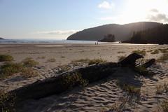 San Josef Bay (Jon Christall) Tags: ocean park sunset sea seascape canada beach nature landscape log bc britishcolumbia capescott provincialpark sanjosefbay