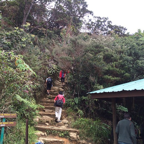 "Bercinta dengan alam sekejap. Walaupun jauh ditinggalkan anak murid... ""pelan-pelan bah"" bilang orang Sabah #nature #climber #Sabah #Malaysia #forest #travel"