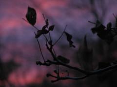 Dark, Lovely (Autumn's Lull) Tags: pink love nature leaves dark soft purple bokeh deep calm romantic lovely