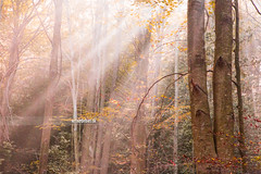 Subeams. (arturii!) Tags: trip morning travel autumn sunlight mountain tree nature beauty forest wow season lights amazing nice interesting woods holidays colorful europe tour superb magic awesome great catalonia route naturereserve stunning vegetation colored viatge rays leafs magical vacations impressive beech sunbeams gettyimages ilumination trunck montseny fogy rajos arturii arturdebattk canonoes6d