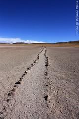 The way ... Atacama Desert, Chile. (RViana) Tags: chile amricadosul amricalatina desiertodeatacama desertodoatacama atacamadesert miscanti miniques atacamawste beacheslandscapes dsertdatacama desertodiatacama  atacamawoestijn lechili   atacamaknen  atacamawoestyn  lpdisappear