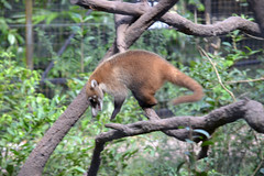 2013_Florida and Cruise_Cruise_Belize_Belize Zoo_22 (Jared625) Tags: belize belizecity belizezoo