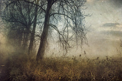 Fog over the Marshes (Sarah Jarrett) Tags: winter painterly beauty illustration landscape norfolk poetic memoriesbook sarahjarrett