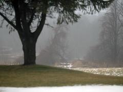 rainy wet and mild (5) (Ange 29) Tags: trees snow canada rain melting king olympus township omd em1 zd 35100mm