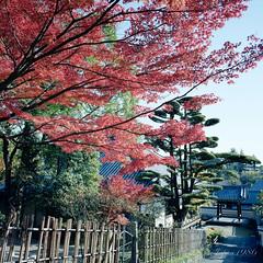(GenJapan1986) Tags: autumn 6x6 film japan temple worldheritagesite   nara 2014  kodakportra400     fujifilmgf670wprofessional