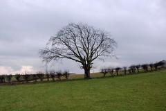 Tree at Dechmont (James B Brown) Tags: lanarkshire blantyre