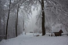 Winter in my head (DelightTurkish) Tags: schnee trees winter snow forest wald bume gmuend gmnd schwbischealb schwbischgmnd nenningen