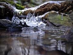 [1/52] Eau et glace (Si rien ne bouge) Tags: eau glace ruisseau
