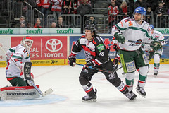 """DEL15 Kšlner Haie vs. Augsburg Panthers • <a style=""""font-size:0.8em;"""" href=""""http://www.flickr.com/photos/64442770@N03/16114885920/"""" target=""""_blank"""">View on Flickr</a>"""