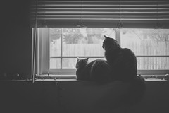 Best Friends (Patrick Chondon) Tags: friends bw cats window kitties