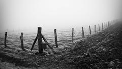 Clôtures en hiver. (steph20_2) Tags: winter bw white black monochrome lumix countryside noir noiretblanc hiver ngc panasonic g5 prairie monochrom campagne blanc picardie clôture pré oise m43 skanchelli