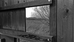 Rieselfelder | Mnster (_dankhn) Tags: bw reed nature germany deutschland blackwhite wooden natur lookout nrw sw gras monochrom nordrheinwestfalen mnster schilf mnsterland rieselfelder hlzern birdreserve vogelschutzgebiet schwarzweis beobachtungspunkt