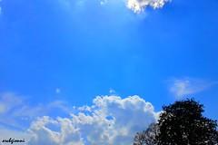 white powder (archgionni) Tags: blue trees sky white nature leaves foglie alberi clouds blu branches natura powder bianco rami polvere totalphoto