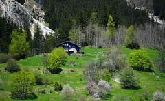 Chalet de montagne et promeneur (yoduc73) Tags: chien alpes chalet savoie champagny tarentaise randonneur lontagne