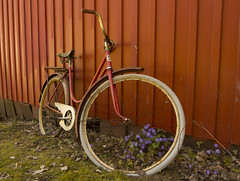 Last days reloaded (jtrasanephoto) Tags: old flower bicycle last warm retired