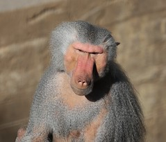 Zoo Santiago de Chile (vazha10) Tags: santiago animals canon zoo 6d anemals