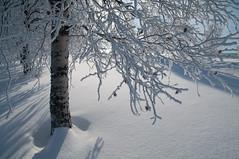 _IGP5469 (xross-country) Tags: vinter pentax stad stersund smcpda1650mmf28edalifsdm smcpentaxda1281650mmedalsdmif