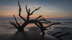 Driftwood Beach (Jeremy Duguid) Tags: ocean morning sea reflection tree beach nature sunrise georgia landscape outdoors island dawn coast sony south jeremy east southern driftwood coastal southeast jekyll duguid