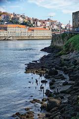 PORTUGAL - Porto (Infinita Highway!) Tags: trip travel portugal highway europa europe sony porto viagem alpha infinita