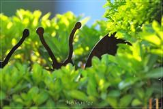 Hello (friedrichfrank1966) Tags: flowers sunshine blumen snails schnecken sonnenschein