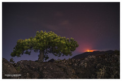 The tree and the fire (Vulcanian) Tags: volcano etna eruption
