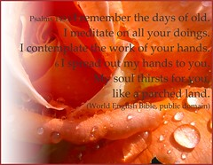 Psalm 143:5-6 (Martin LaBar) Tags: rose poster remember desire memory meditation waterdrops contemplate thirst thirsty contemplation psalm14356